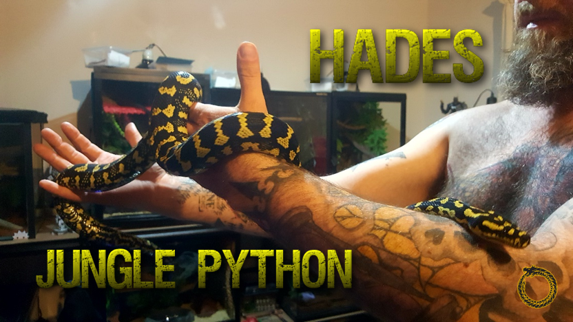 Boot Camp Week 3 – It's time to test the Jungle Pythons' bittiness